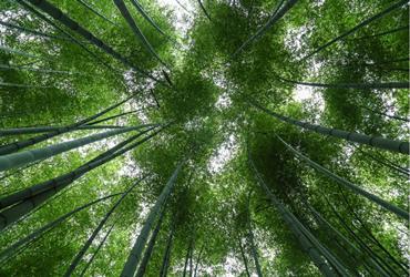 第二批省翠竹长廊名单的公示 绵阳三地入选